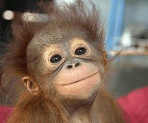 День 22: Обезьяна видит, обезьяна делает!