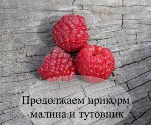 Продолжаем прикорм малина и тутовник