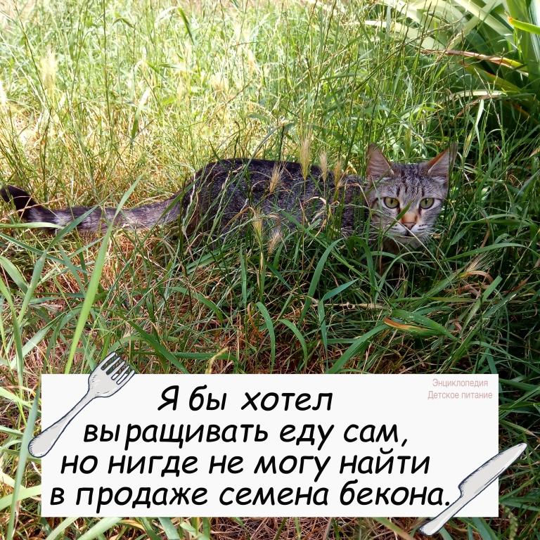юмор кот