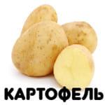 картофель от А до Я