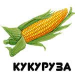 кукуруза от А до Я