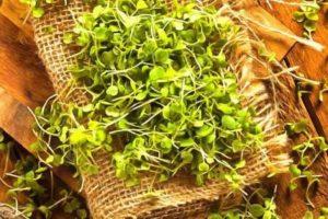 микрозелень для детей