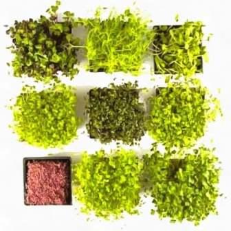 микрозелень прикорм