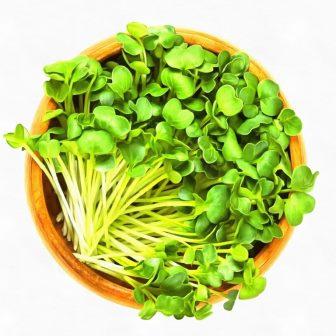 микрозелень-редис