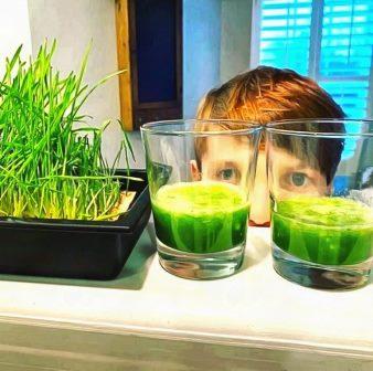 смузи микрозелень
